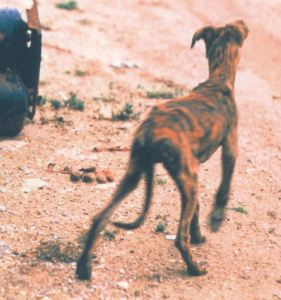 Disgrace dog